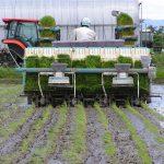 自然栽培、無農薬の田植えが終わりました。(^o^)