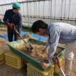 自然栽培育苗用のボカシ肥料をつくりました(^o^)