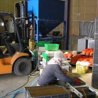 床土を入れた箱を機械に流します。
