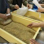 玄米で作った麹、「玄米麹」を使って味噌づくり!