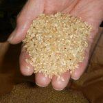「自然栽培米」についていろいろな声をいただきました
