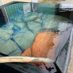 60℃の温湯による種子消毒