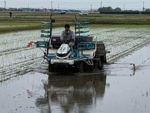 自然栽培米こしひかり田植