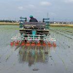 田植え機による除草