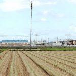 稲刈が終わった田んぼと旗木