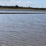 無農薬田 冬季湛水