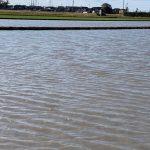 無農薬田 冬季湛水1