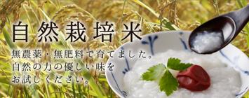 自然栽培米こしひかり