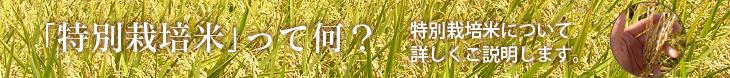 特別栽培米について