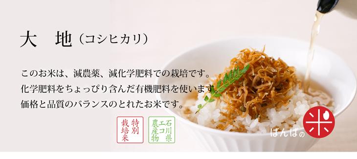 大地(コシヒカリ_)