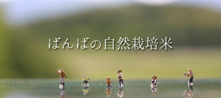 ばんばの自然栽培米