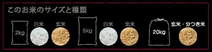 お米のバリエーション